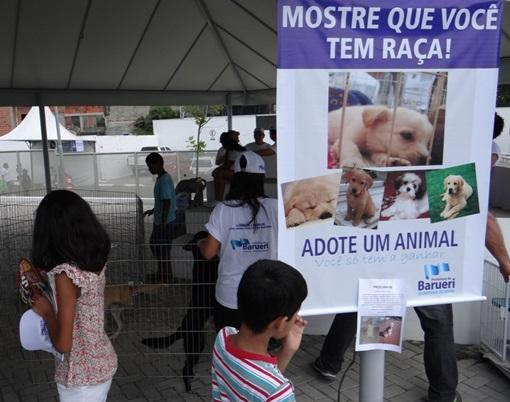 Feira especial de adoção de cães e gatos