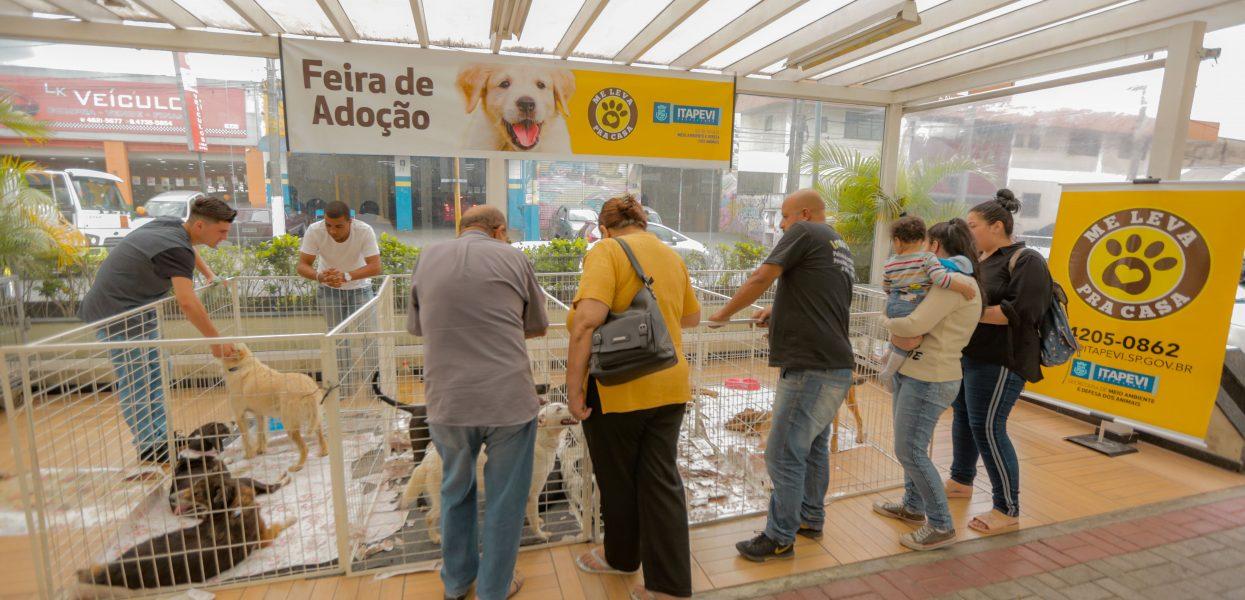 19ª edição da Feira de Adoção de Cães e Gatos em Itapevi